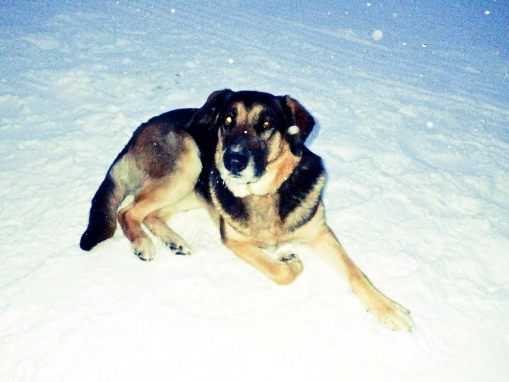 Our mascot – Mishka!